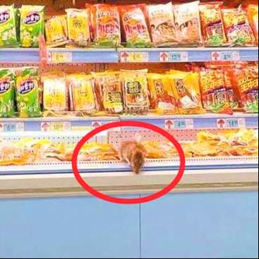 超市冷藏柜惊现老鼠曝光如何处理